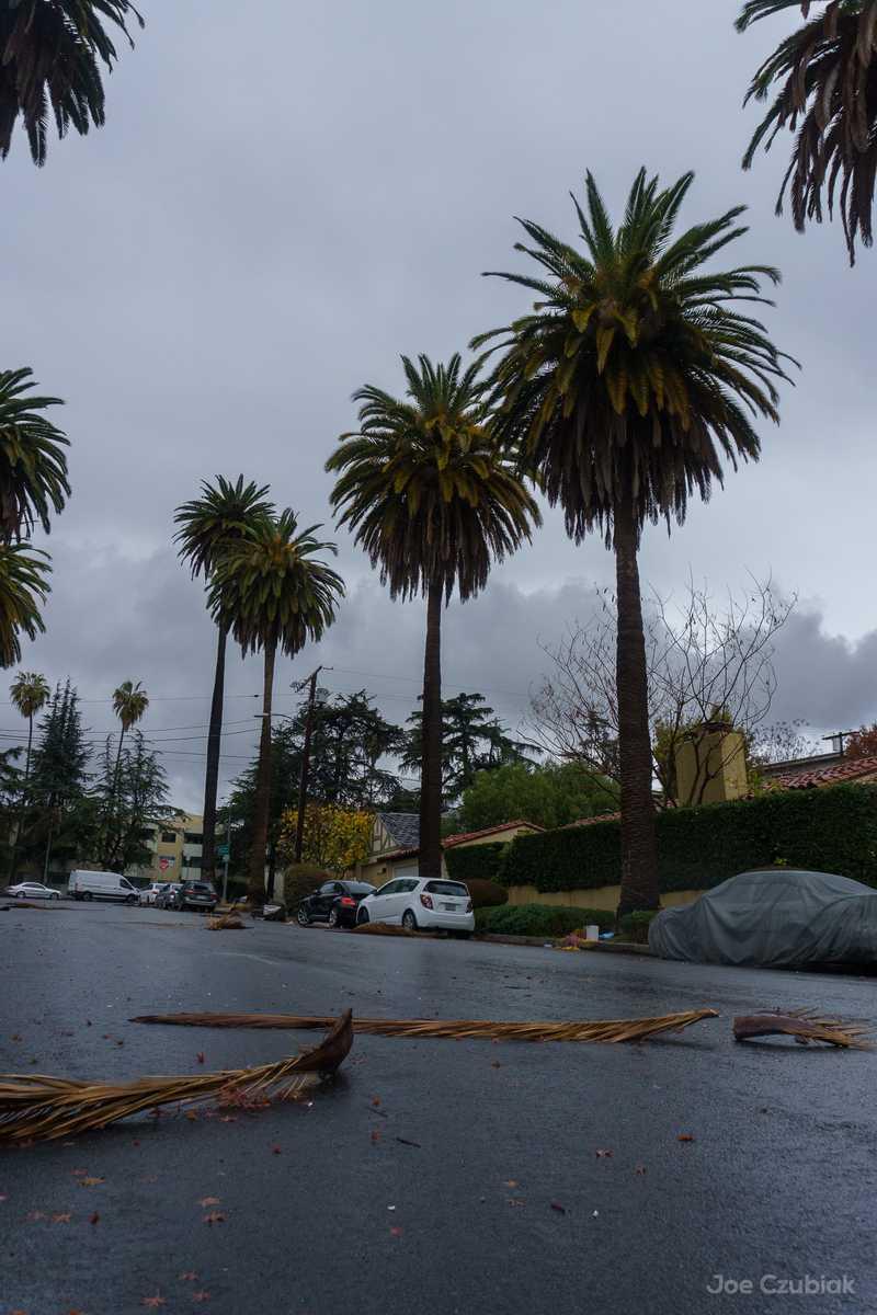 Fallen palm fronds on street in Los Feliz