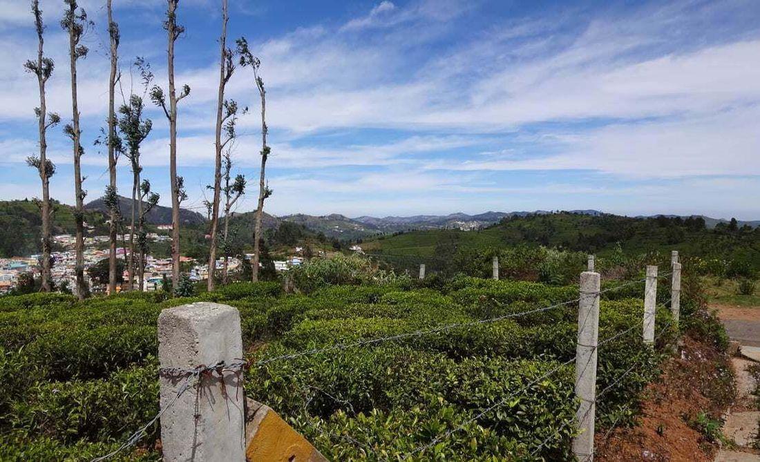 Views of Ellithorai village and the tea estates on a sunny day