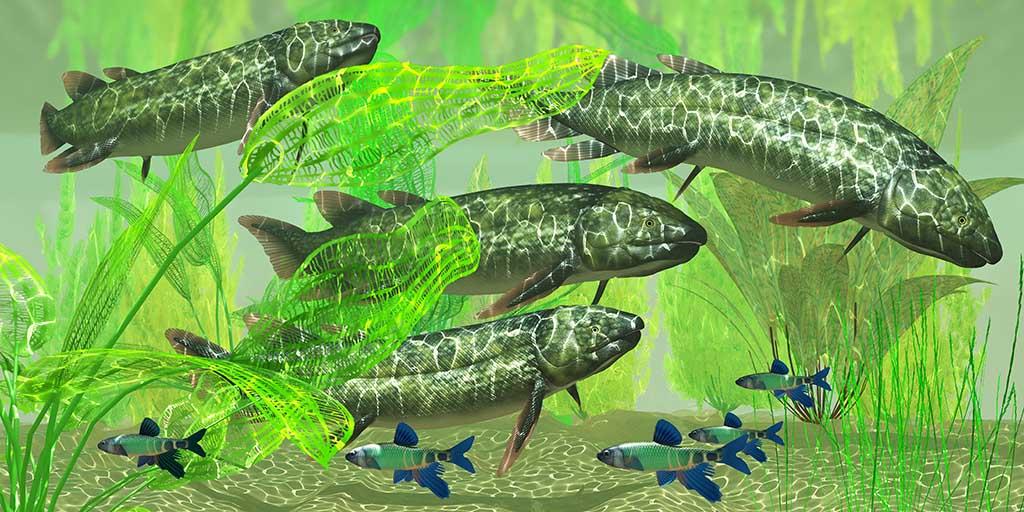 Dipterus is an extinct freshwater lungfish