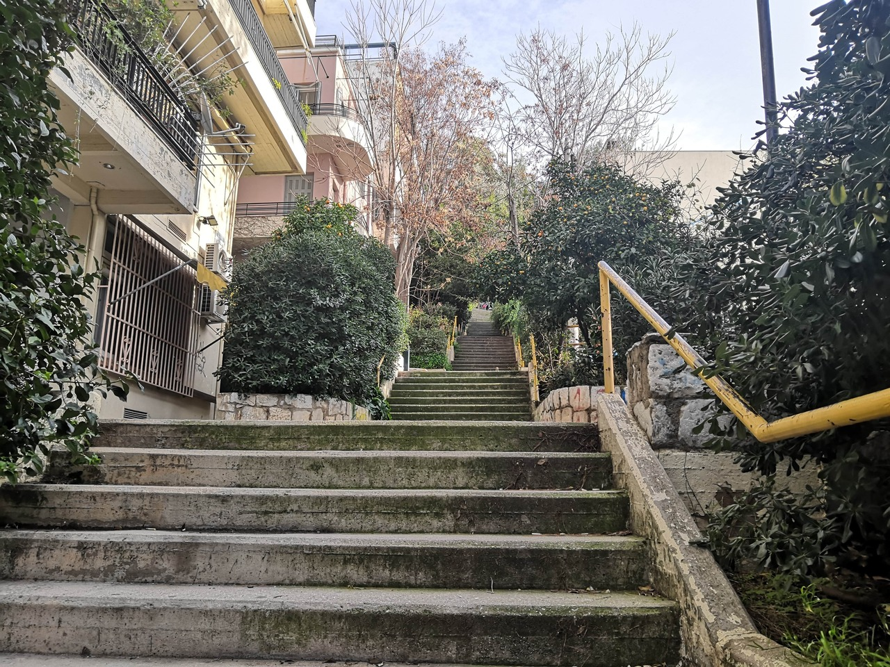 Urban staircase with bushes