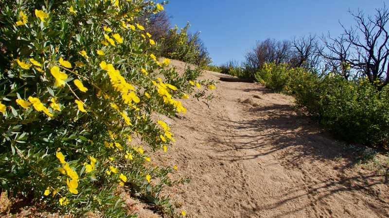 Smooth trail with wildflowers