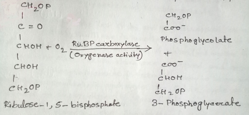 Reaction showing the oxygenase activity of the enzyme RuBP carboxylase