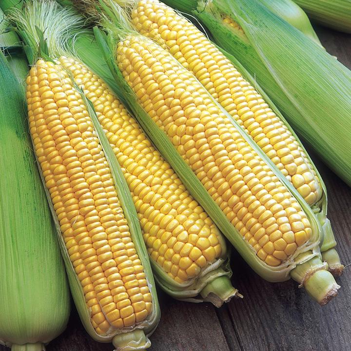 GMO-hisztéria 5: A GMO-k földrajzi elterjedtsége és a brazil példa. Összefoglalás.