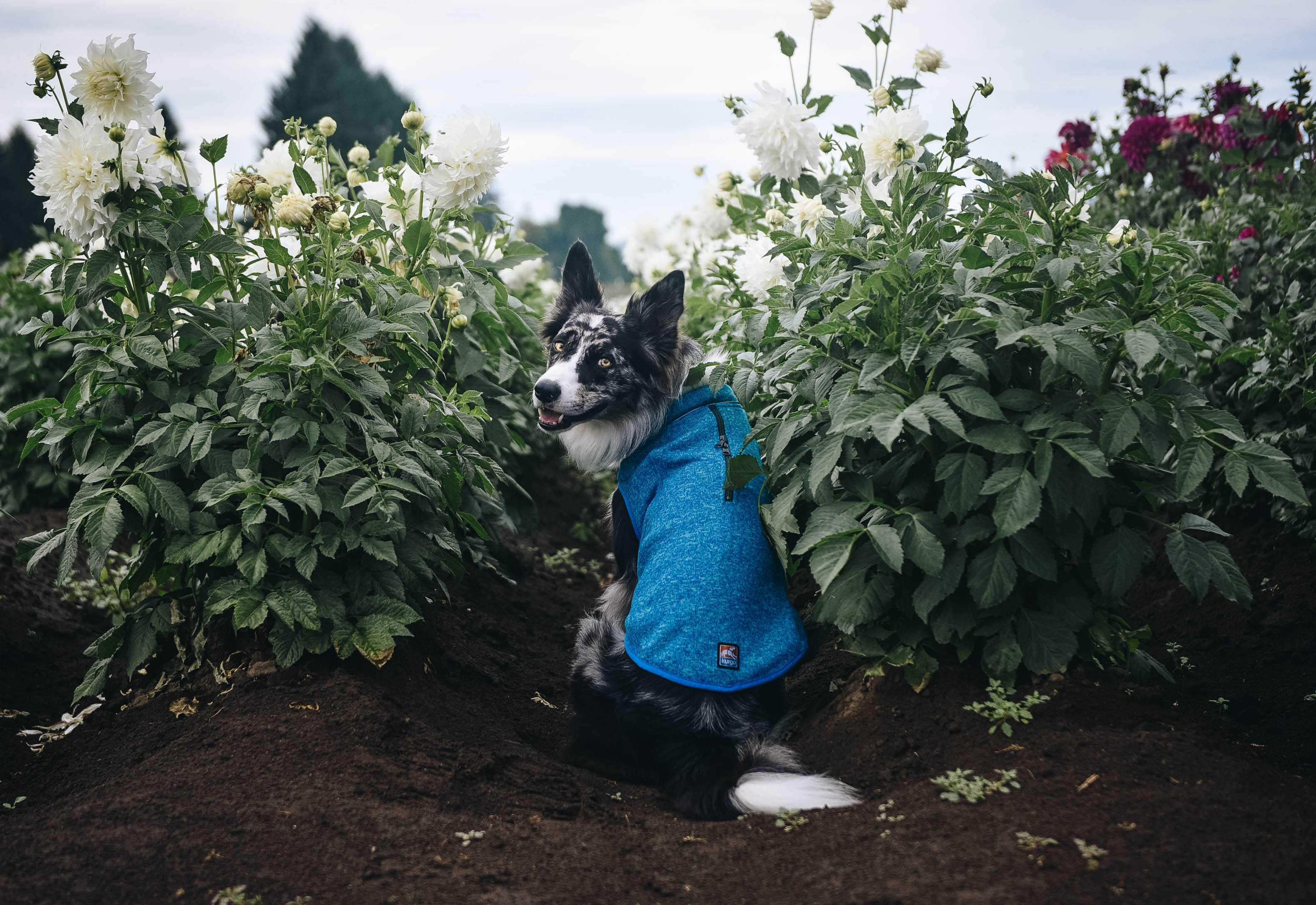 Trail Tested: Kurgo K9 Core Sweater