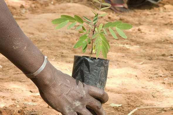Progetto di riforestazione in Kenya.