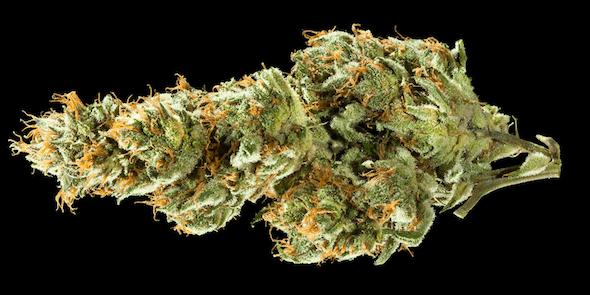 Medihaze marijuana strain and ASMR