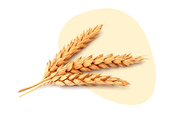 Cereals Containing Gluten is listed as one of the 14 major food allergens