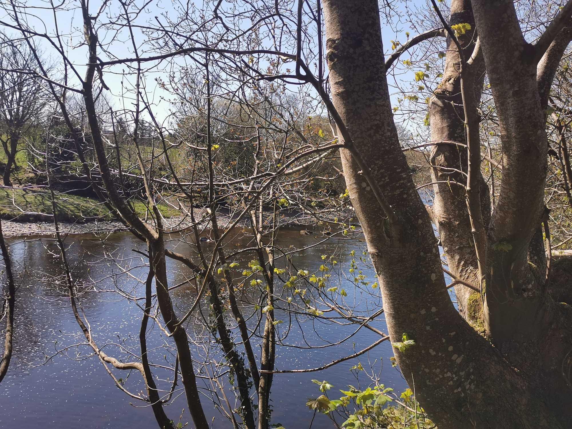 Downstream River Finn