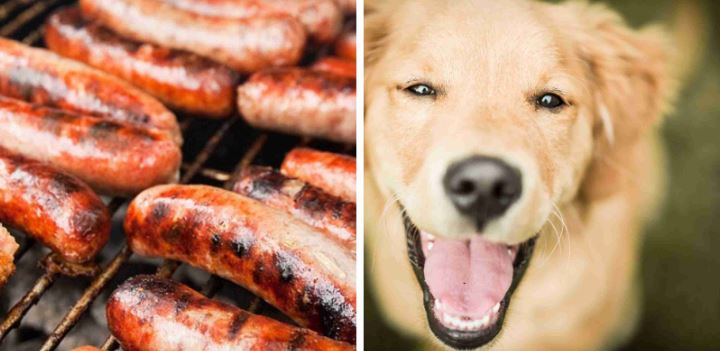 dog and sausages collage