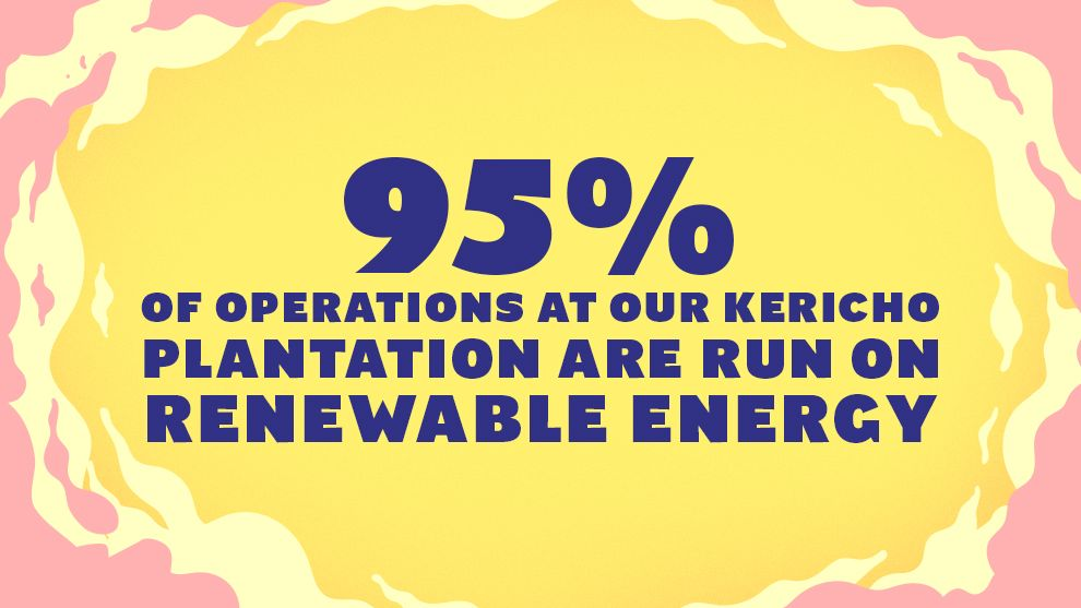 95% of operations at our Kericho plantation are run on renewable energy