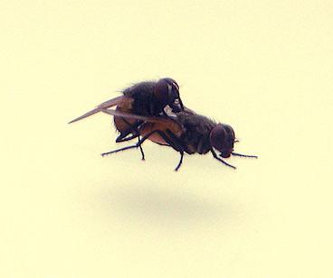 Fly love II