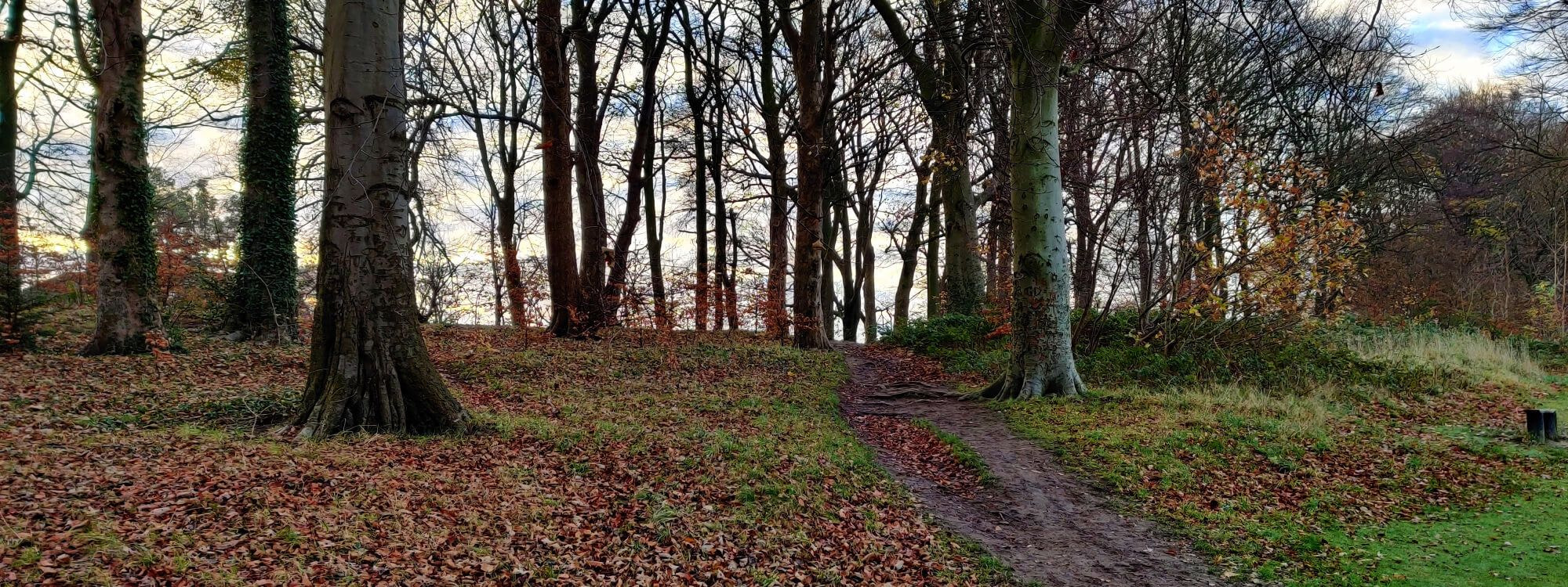 Batcliffe Woods in the morning