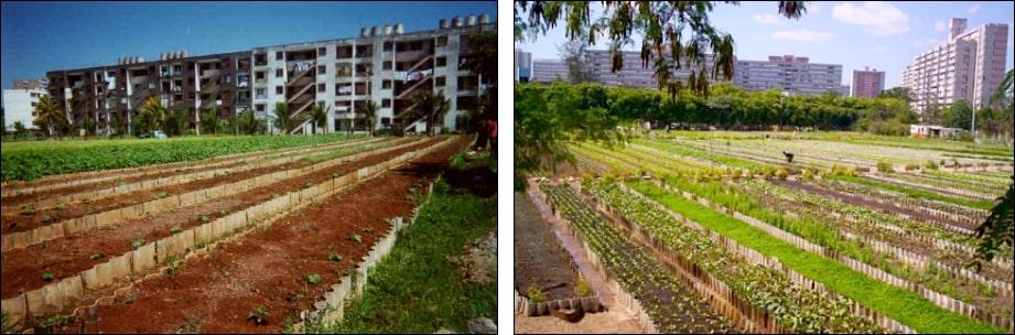 Városi mezőgazdaság a szuburbiában