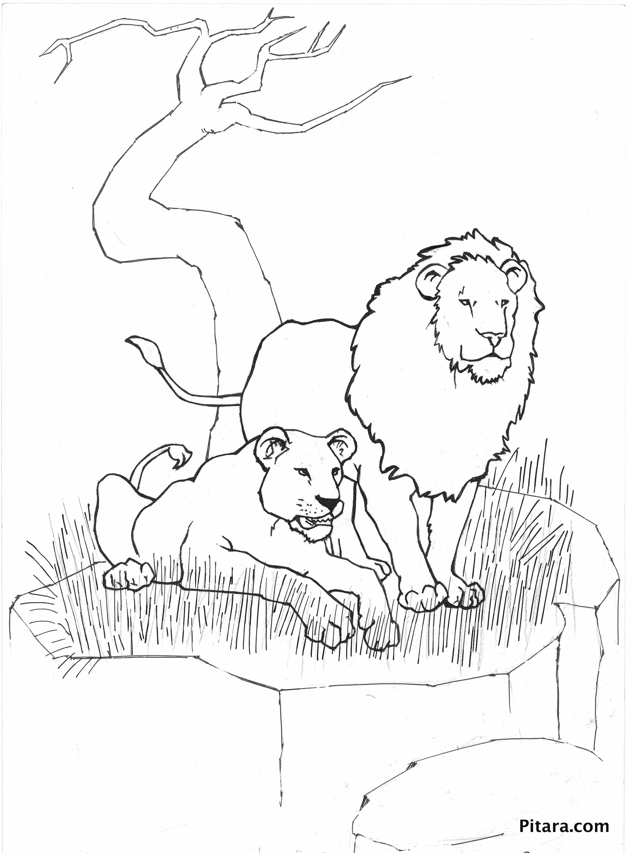Wild Animals Coloring Pages – Pitara Kids Network
