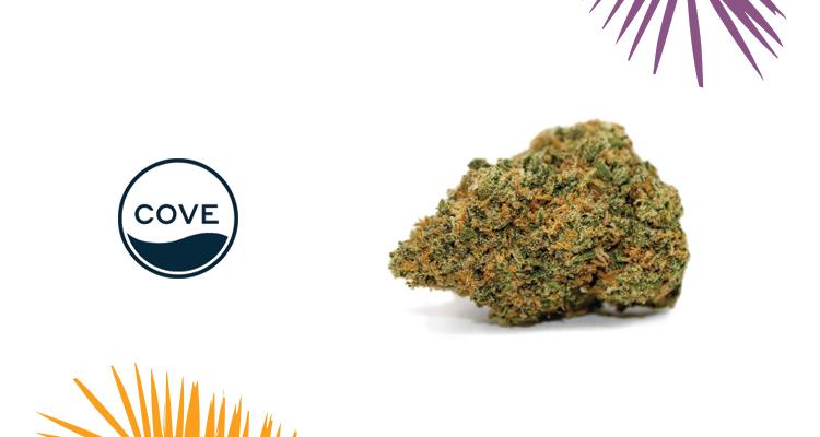Cove – Rise Reserve Strain