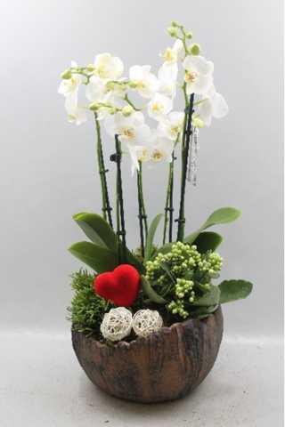 Ronde rustieke schaal met orchideeën en planten