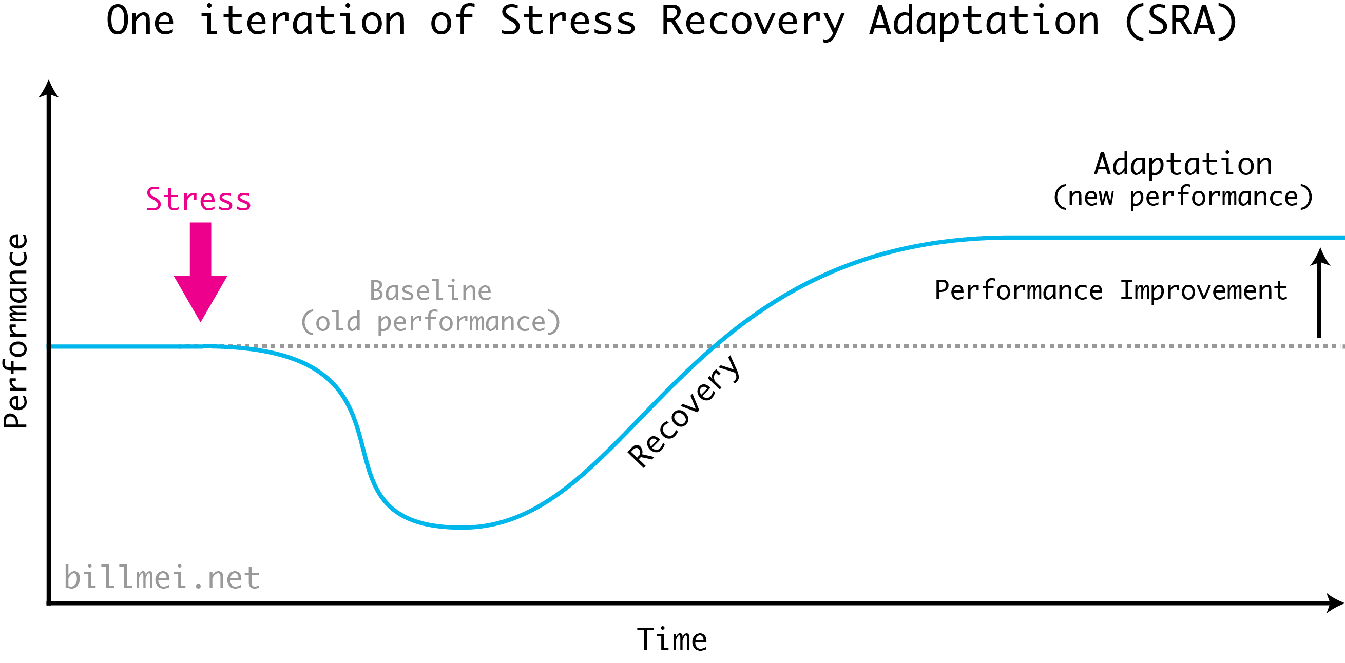 One iteration of the Stress Recovery Adaptation (SRA) cycle. Performing exercise creates stress on the body, which diminishes your biological capabilities for a short time. As you eat and sleep, your body repairs itself during recovery, plus some additional extra capacity (adaptation) to handle future stress.