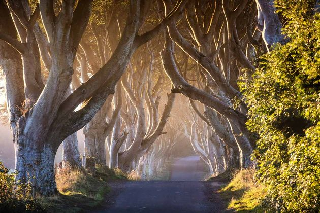 Chauffeur Me Tour Location - The Dark Hedges