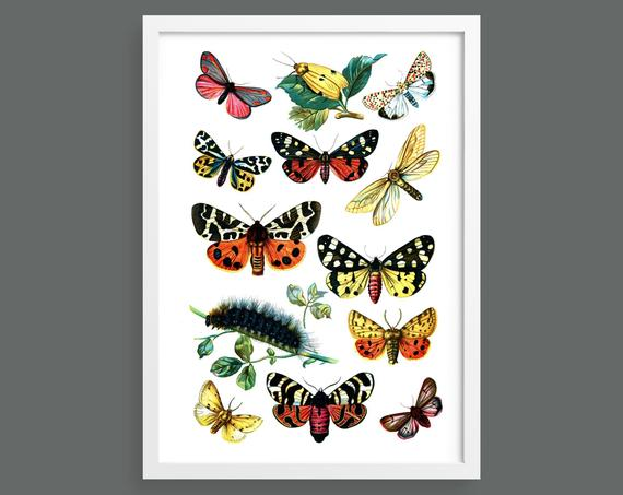 Botanical butterfly poster 7