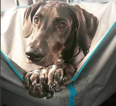 5 Steps to Stop Your Dog from Barking in the Car