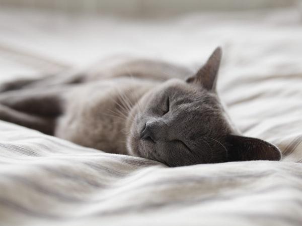 Relaxing Body Scan To Sleep
