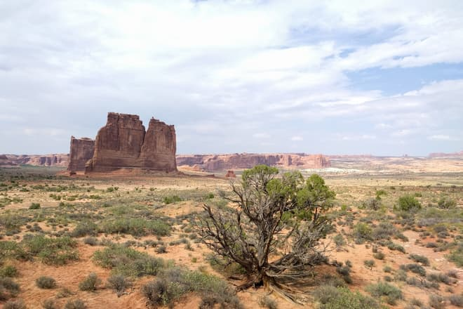 Looking north across Arches National Park. A small bush sits in the foreground, while the background is dominated by tall, thin fins of red sandstone.
