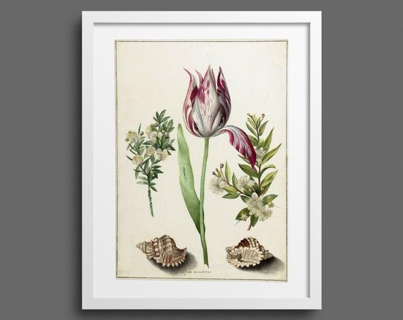 Tulip, Myrtle & Shells