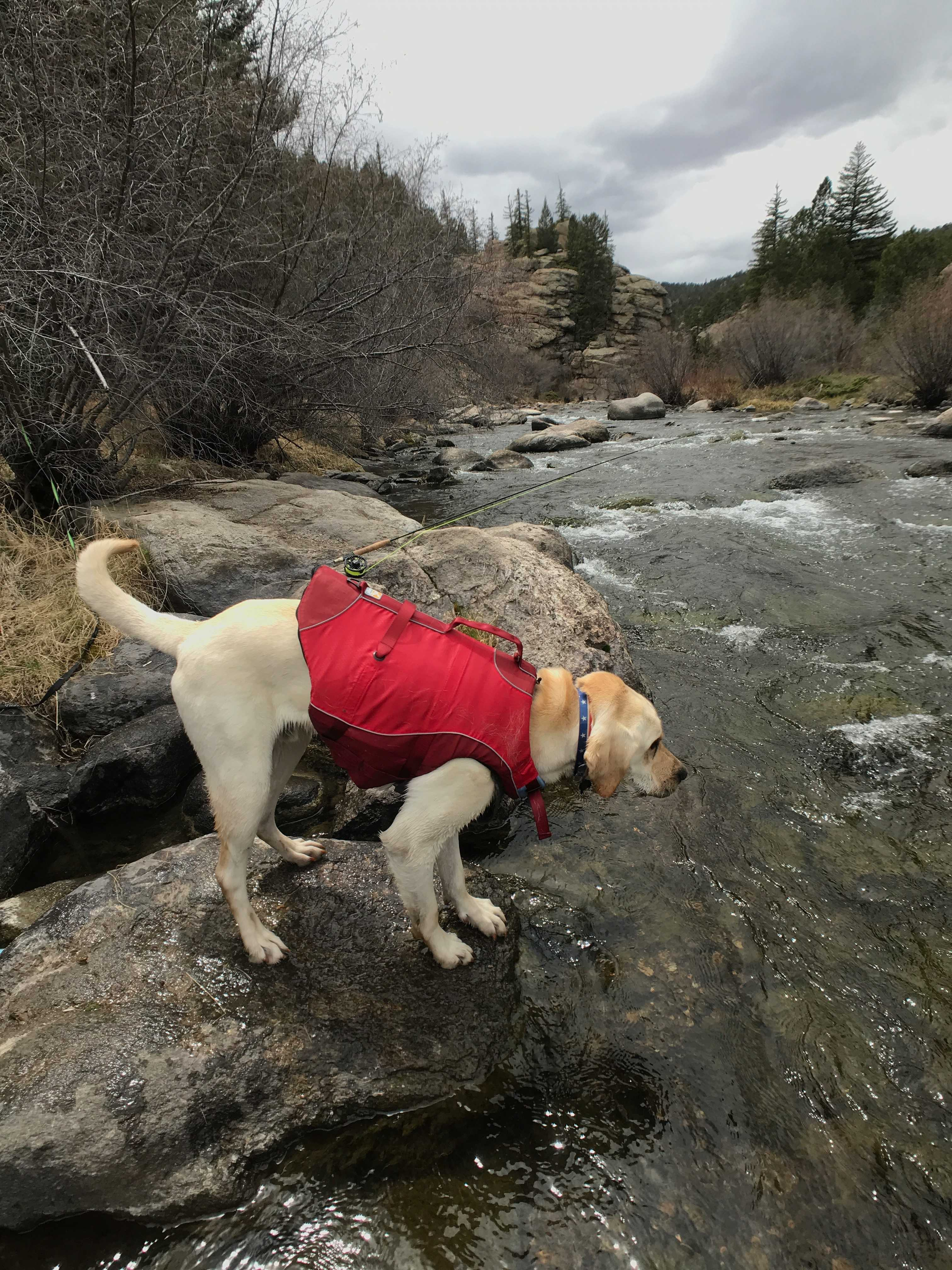 5 Ways to Prepare to Fly Fish with Your Dog