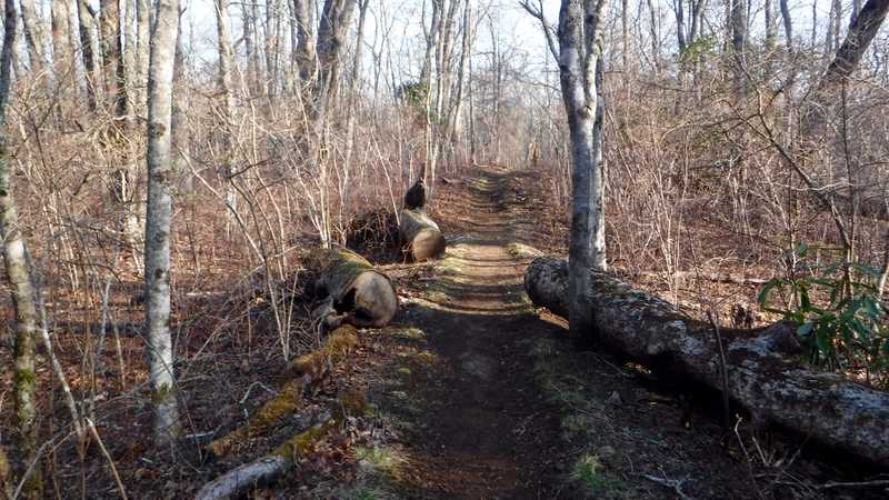 The trail leaving Wesser Shelter