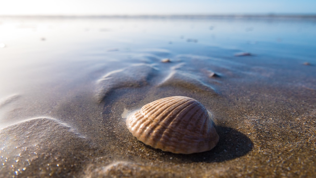Shell on a beach - Photo by Wynand van Poortvliet on Unsplash
