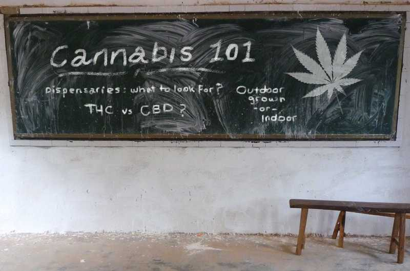 Cannabis 101: Your Quick Guide to Medical Marijuana