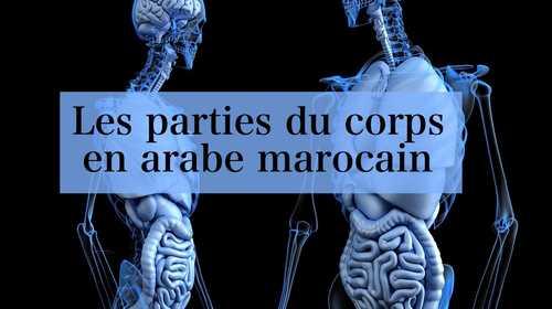 Les parties du corps en arabe marocain