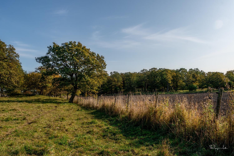 Eken i hagen på hösten