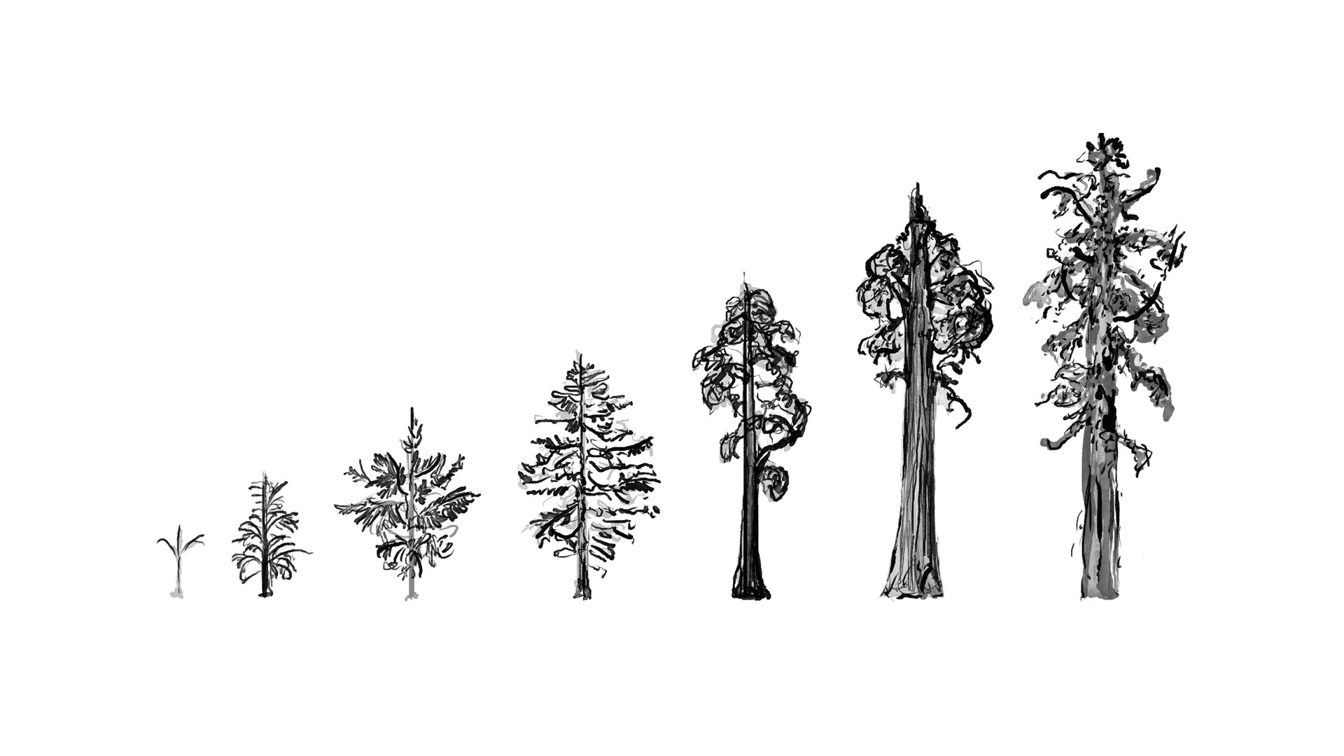 Tree-evolution