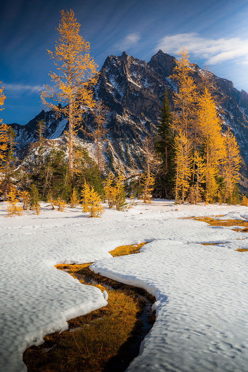 Autumn Larch Trees in the North Cascades of Washington