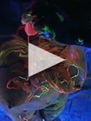 Black Light Video