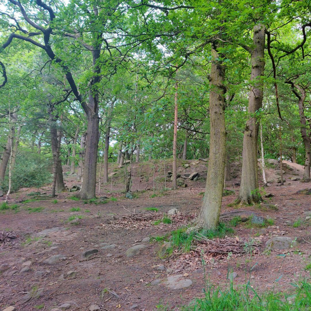 Meanwood Park Wood