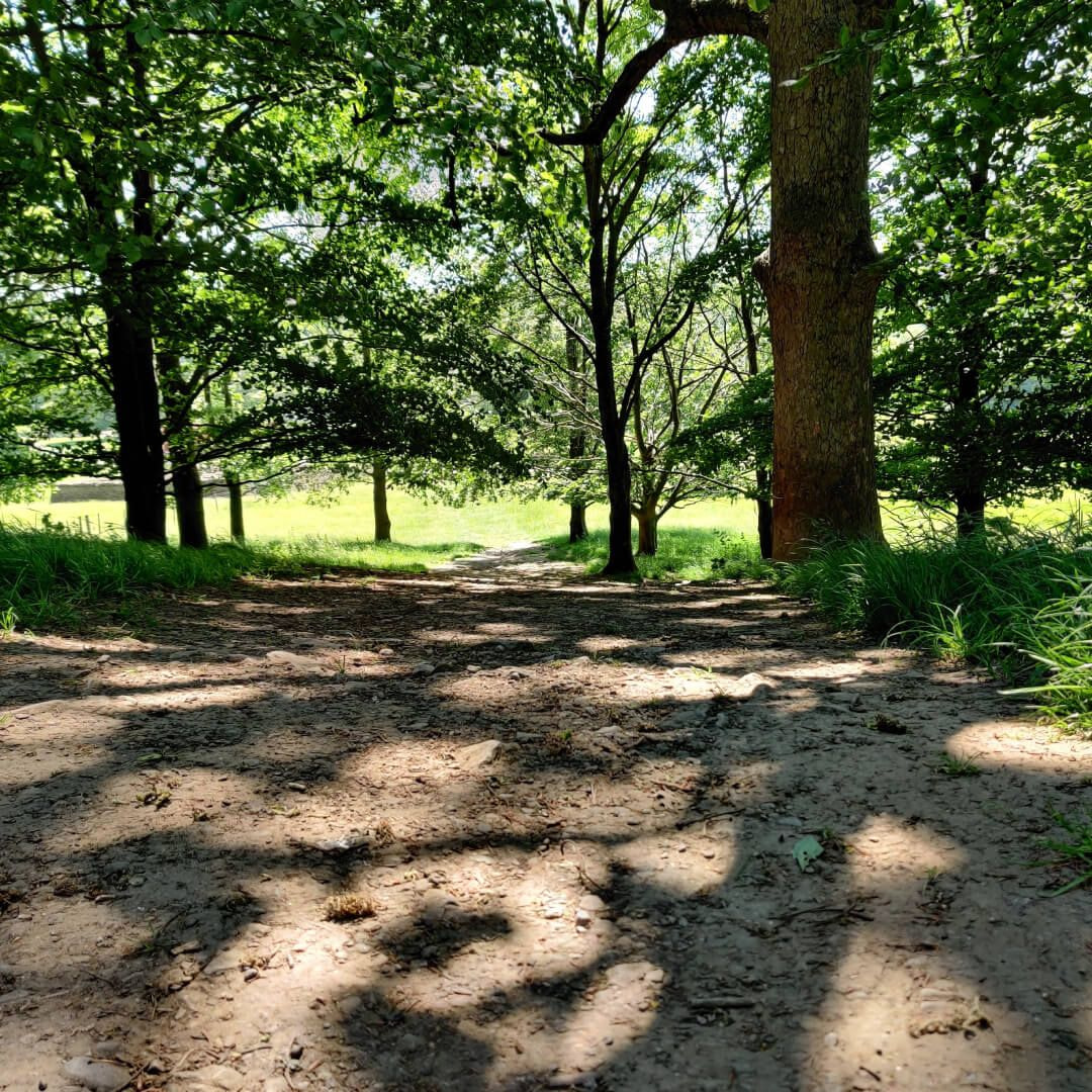 Shaded trees and path at Yorkshire Sculpture Park