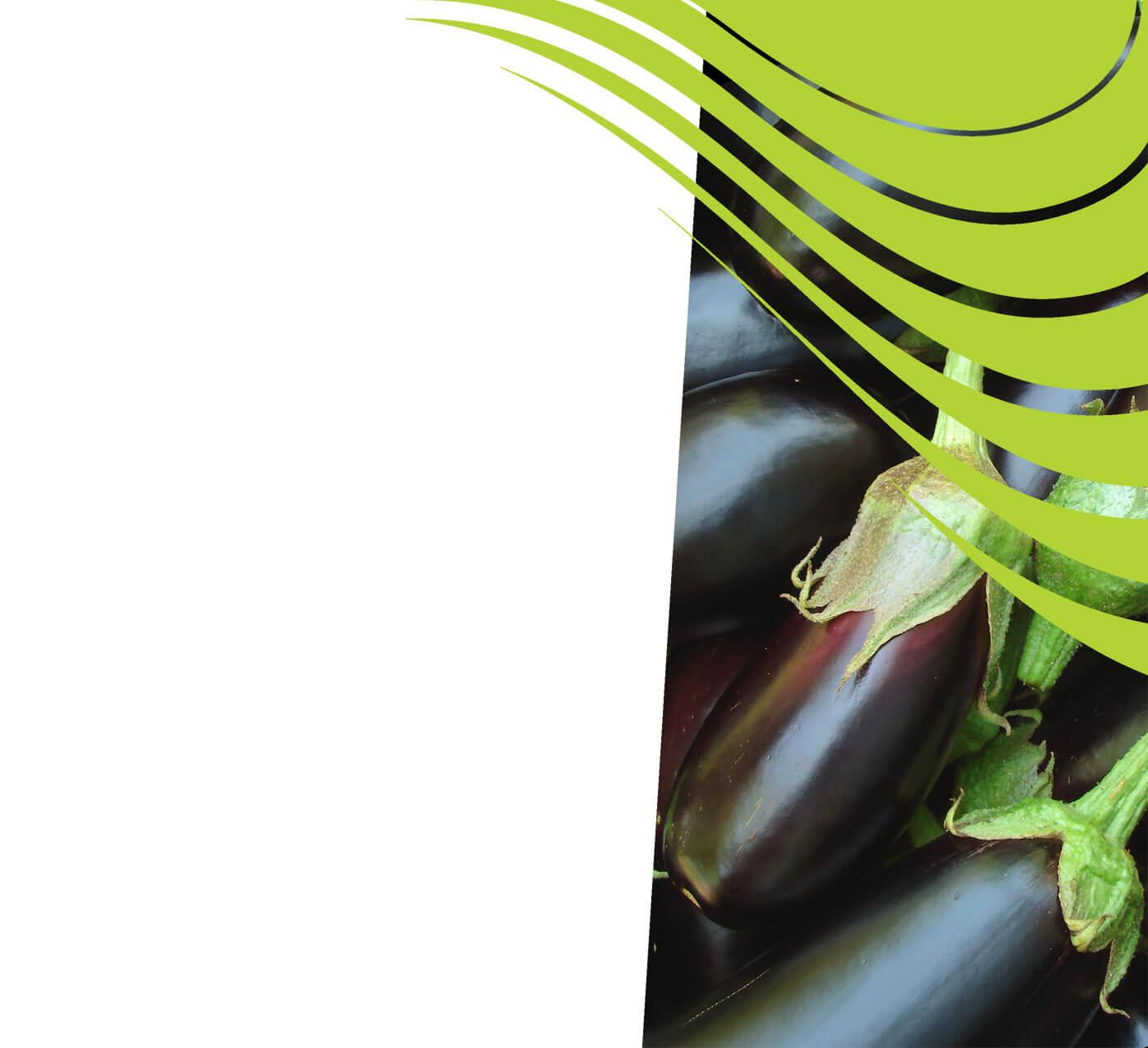 fertiliser for eggplants