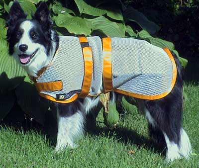 Milo Models his New Magnetic Coat