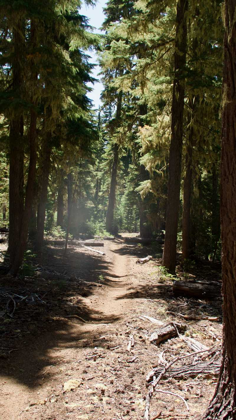 Smooth trail on the PCT