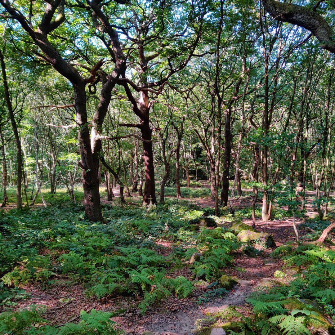 Hawksworth Wood steps through woods