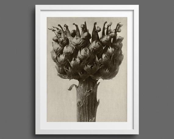 Thistle flower - Plate 112