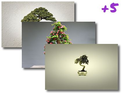 Bonsai Tree theme pack