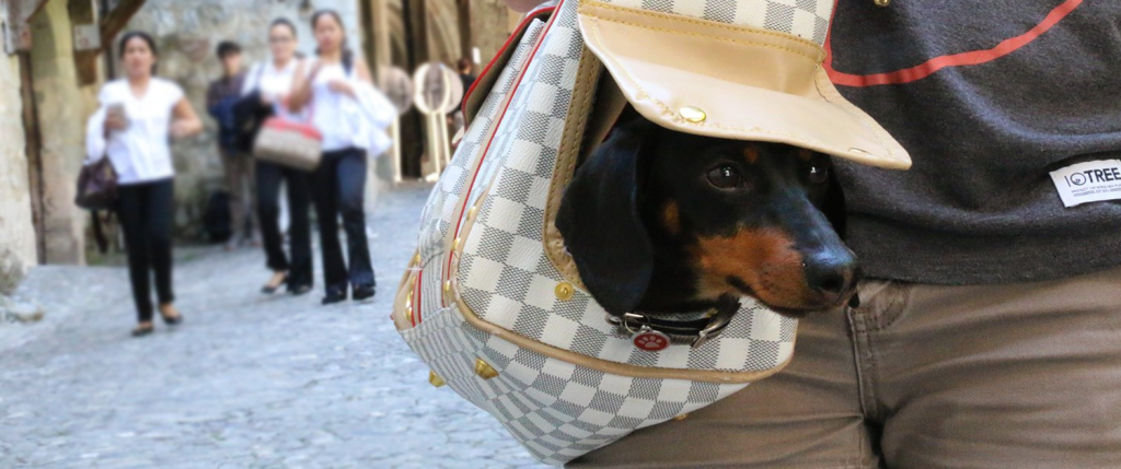A dog in a carry bag