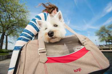 3 Dog Friendly Cities In The U.S.A.