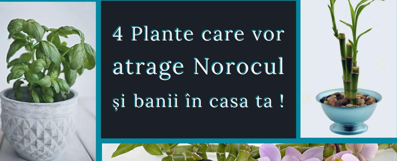 4 plante care vor atrage norocul și banii in casa ta!