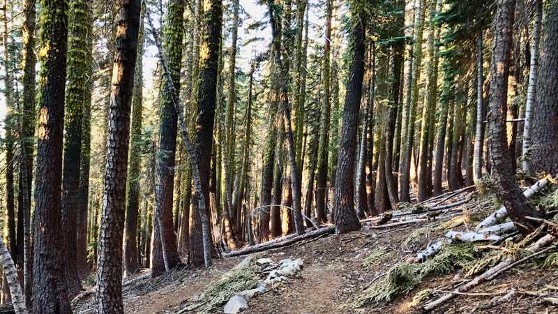 Trees dappled by sunlight