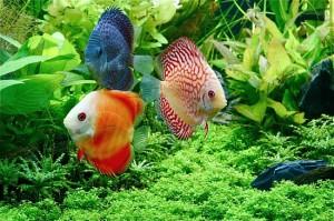 Choosing Aquarium Plants - Fake Or Real For Your Freshwater Aquarium?