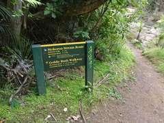 Down towards Mokoroa Stream track